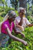 Δύο κυρίες που μαδούν το τσάι Στοκ φωτογραφία με δικαίωμα ελεύθερης χρήσης