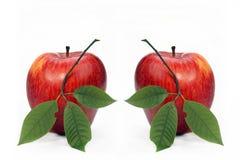 Δύο κόκκινα μήλα Στοκ εικόνα με δικαίωμα ελεύθερης χρήσης