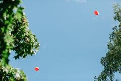Δύο κόκκινα μπαλόνια ενάντια σε έναν καθαρό μπλε ουρανό που πλαισιώνεται από τους κλάδους των δέντρων με το πράσινο φύλλωμα   στοκ φωτογραφία