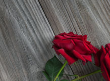 Δύο κόκκινα τριαντάφυλλα σε ένα ξύλινο υπόβαθρο Στοκ Φωτογραφίες