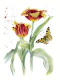 Δύο κόκκινη Terry τουλίπα, σκίτσο watercolor, με μια πεταλούδα και έναν ψεκασμό Στοκ Φωτογραφίες