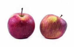 Δύο κόκκινο - κίτρινα μήλα σε ένα άσπρο υπόβαθρο - μπροστινή άποψη στοκ φωτογραφία με δικαίωμα ελεύθερης χρήσης