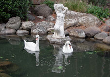 Δύο κύκνοι σε μια λίμνη με το παλαιό γλυπτό Στοκ φωτογραφίες με δικαίωμα ελεύθερης χρήσης