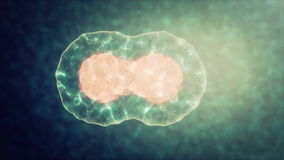 Δύο κύτταρα διαιρούν με την όσμωση απόθεμα βίντεο