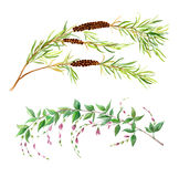 Δύο κλάδοι watercolor Στοκ φωτογραφία με δικαίωμα ελεύθερης χρήσης