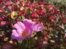 Δύο λουλούδια στον κήπο στοκ φωτογραφίες