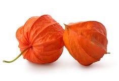 Δύο λουλούδια των physalis Στοκ Φωτογραφία