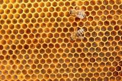 Δύο μέλισσες Στοκ εικόνα με δικαίωμα ελεύθερης χρήσης