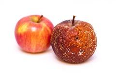 Δύο μήλα σε μια άσπρη ανασκόπηση Στοκ Εικόνες