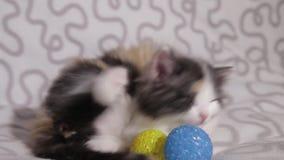 Δύο μικρά γατάκια στον καναπέ απόθεμα βίντεο