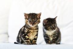 Δύο μικρά και χαριτωμένα γατάκια που κάθονται στον καναπέ στο σπίτι Στοκ εικόνες με δικαίωμα ελεύθερης χρήσης