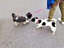 Δύο μικρά σκυλιά στοκ φωτογραφίες