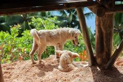 Δύο μικρά σκυλιά στο φιλιππινέζικο χωριό στοκ φωτογραφία