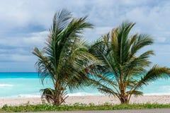 Δύο μικροί φοίνικες σε μια τέλεια καραϊβική παραλία Στοκ Φωτογραφία