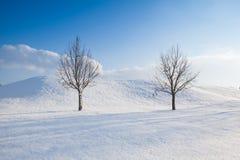 Δύο μόνα δέντρα σε ένα χειμερινό τοπίο Στοκ εικόνα με δικαίωμα ελεύθερης χρήσης