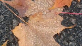 Δύο μόνα φύλλα Στοκ Εικόνα
