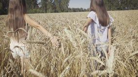 Δύο νέες φίλες που περπατούν στον τομέα σίτου απόθεμα βίντεο
