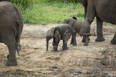 Δύο νέοι συμπαίκτες ελεφάντων που απολαμβάνουν το ποτό τους στοκ φωτογραφίες