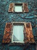 Δύο ξύλινες παράθυρα και σύσταση τοίχων με τις ξηρές εγκαταστάσεις που αυξάνονται στην πρόσοψη ενός παλαιού κτηρίου στοκ φωτογραφίες με δικαίωμα ελεύθερης χρήσης