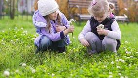 Δύο λουλούδια επιλογής μικρών κοριτσιών στο λιβάδι απόθεμα βίντεο