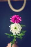 Δύο λουλούδια ως 8 οκτώ αριθμό Στοκ εικόνες με δικαίωμα ελεύθερης χρήσης