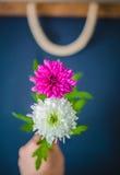 Δύο λουλούδια ως 8 οκτώ αριθμό Στοκ Φωτογραφίες
