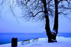 Δύο πάγκοι στο νησί χιονιού κοντά στην ταπετσαρία βραδιού δέντρων στοκ εικόνα με δικαίωμα ελεύθερης χρήσης