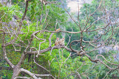 Δύο πίθηκοι Στοκ φωτογραφία με δικαίωμα ελεύθερης χρήσης