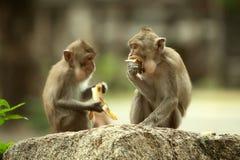 Δύο πίθηκοι Στοκ Φωτογραφίες