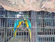 Δύο παπαγάλοι είναι παγιδευμένοι σε ένα κλουβί Στοκ εικόνα με δικαίωμα ελεύθερης χρήσης