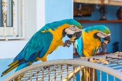Δύο παπαγάλοι στο κύτταρο Στοκ Φωτογραφίες