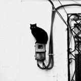 Δύο παρακολουθημένη γάτα Στοκ φωτογραφία με δικαίωμα ελεύθερης χρήσης