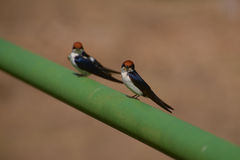 Δύο περίεργα πουλιά Στοκ εικόνα με δικαίωμα ελεύθερης χρήσης