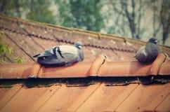 Δύο περιστέρια στη στέγη Στοκ Φωτογραφία
