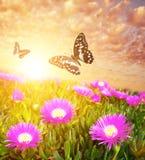 Δύο πεταλούδες ενάντια στον όμορφο ουρανό Στοκ Φωτογραφία