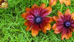 Δύο πολύ όμορφα λουλούδια στη χλόη μετά από τη βροχή Κινηματογράφηση σε πρώτο πλάνο φιλμ μικρού μήκους