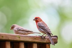 Δύο πουλιά με έναν Stone στοκ εικόνες