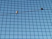 Δύο πουλιά που κάθονται την ηλεκτρική γραμμή στοκ φωτογραφία