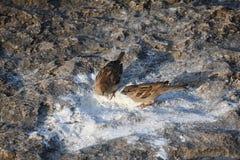 Δύο πουλιά που στέκονται στην άσπρη άμμο στοκ εικόνες με δικαίωμα ελεύθερης χρήσης