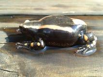 Δύο-ριγωτός βάτραχος Στοκ εικόνα με δικαίωμα ελεύθερης χρήσης