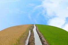 Δύο ροές του νερού μέσω της μέσης μεταξύ ενός ξηρού και ξηρού ρυζιού φ Στοκ φωτογραφία με δικαίωμα ελεύθερης χρήσης