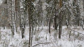 Δύο δρομείς αθλητών που τρέχουν στα χειμερινά ξύλα στο χιόνι απόθεμα βίντεο