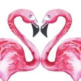 Δύο ρόδινα φλαμίγκο ερωτευμένα διαμορφώνοντας μια καρδιά m ελεύθερη απεικόνιση δικαιώματος