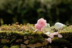 Δύο ρόδινα λουλούδια στον τοίχο πετρών Στοκ Εικόνες