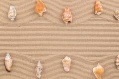 Δύο σειρές των θαλασσινών κοχυλιών που βρίσκονται στην κυματιστή άμμο, με το διάστημα για το κείμενο Στοκ φωτογραφία με δικαίωμα ελεύθερης χρήσης