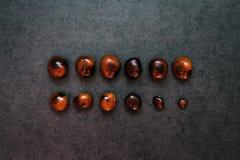 Δύο σειρές των κάστανων στο υπόβαθρο πετρών Στοκ Φωτογραφίες