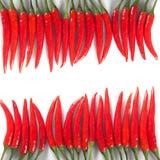 Δύο σειρές των κόκκινων πιπεριών τσίλι Στοκ Εικόνες