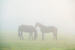Δύο σκιαγραφίες αλόγων στην πυκνή ομίχλη Στοκ φωτογραφία με δικαίωμα ελεύθερης χρήσης