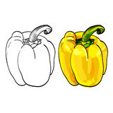 Δύο σκιαγραφημένα γλυκά κίτρινα πιπέρια Ελεύθερη απεικόνιση δικαιώματος