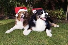 Δύο σκυλιά γιορτάζουν ηλιόλουστη ημέρα κήπων ζεύγους Χριστουγέννων την ευτυχή Στοκ Φωτογραφία